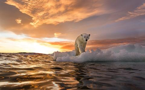 See Canada's polar bears - Credit: PAUL SOUDERS
