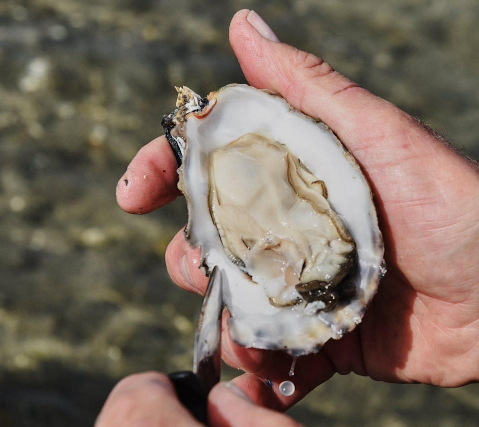 An opened oyster about to be shucked