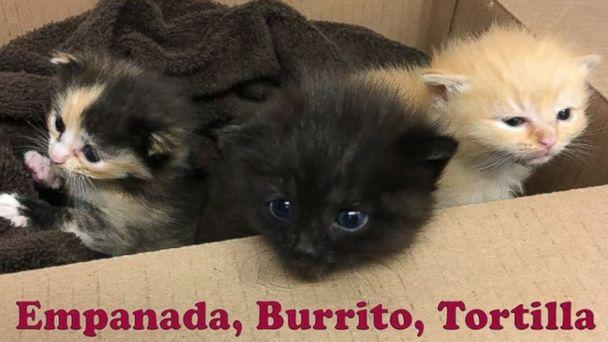 PHOTO: Burrito and his two siblings were dropped off by Good Samaritans at the Animal Welfare Association in the second week of April. (Animal Welfare Association )