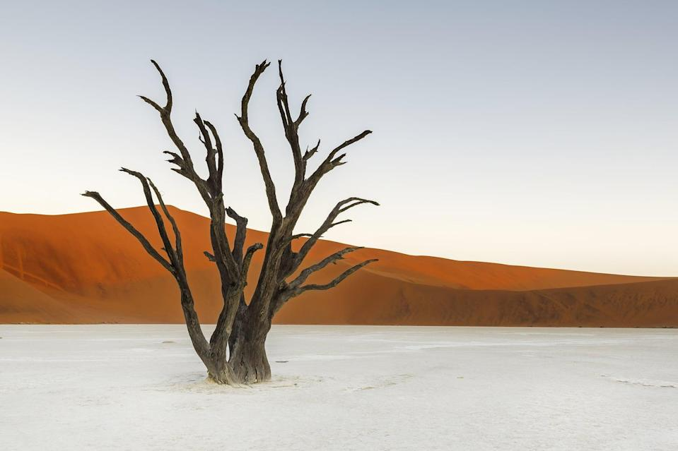 <p>The black, dead trees against the orange sand dunes in the Namib-Naukluft National Park make the Deadvlei landscape look like a scene out of a painting. </p>