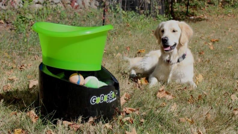 Endless games of fetch are now simple.