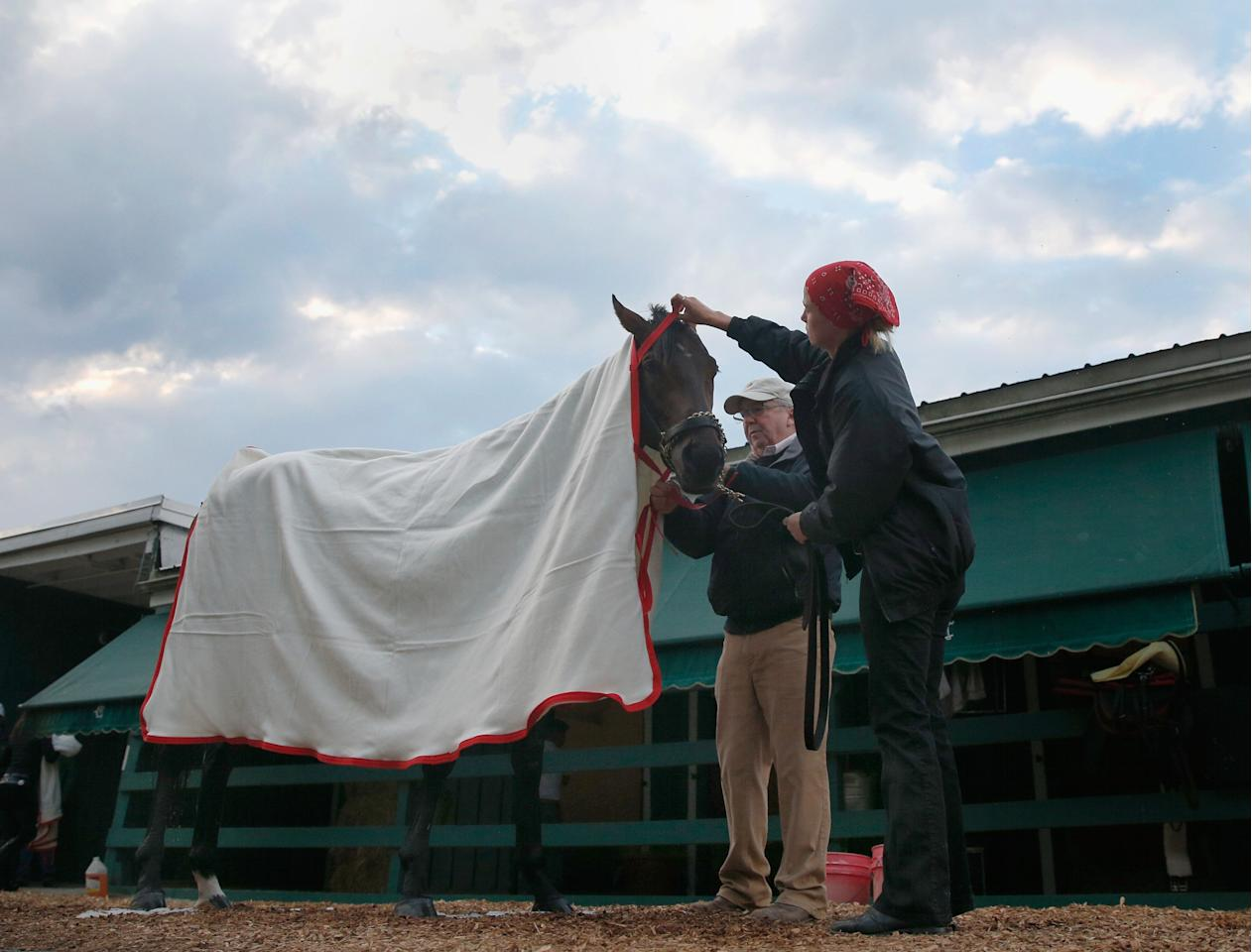 BALTIMORE, MD - MAY 15:  Kentucky Derby winner Orb gets a blanket put on him by exercise rider Jennifer Patterson and trainer Shug McGaughey  following a workout in preparation for the 138th Preakness Stakes at Pimlico Race Course on May 15, 2013 in Baltimore, Maryland.  (Photo by Rob Carr/Getty Images)