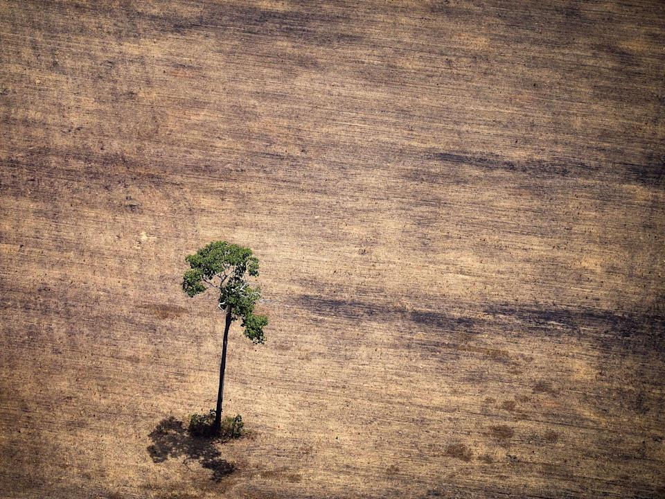 Deforestation has stripped parts of the Amazon, such as here in the state of Para, Brazil (Getty)