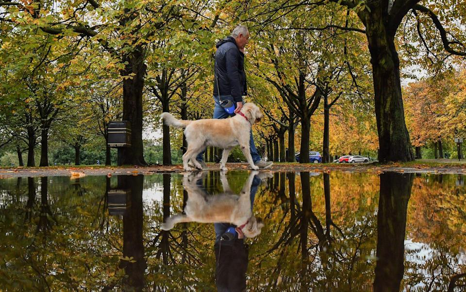 A man walks his dog under trees reflected in a puddle after rainfall in Greenwich Park, south-east London on October 3, 2020 - JUSTIN TALLIS/AFP via Getty Images