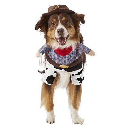 "Get this <a href=""https://fave.co/37cdrXP"" target=""_blank"" rel=""noopener noreferrer"">Frisco Front Walking Cowboy Dog & Cat Costume for $17</a> at Chewy. It's available in size extra-large and has a cute cowboy hat."