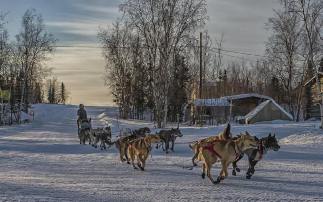 <p>Iditarod musher Katherine Keith arrives at the Huslia checkpoint with 13 dogs in harness Friday morning March 10, 2017, in Huslia, Alaska. Huslia is the halfway point of the Iditarod Trail Sled Dog Race at mile 478 of the 979-mile trail for this year's race. (Mike Kenney/Iditarod Trail Committee via AP) </p>