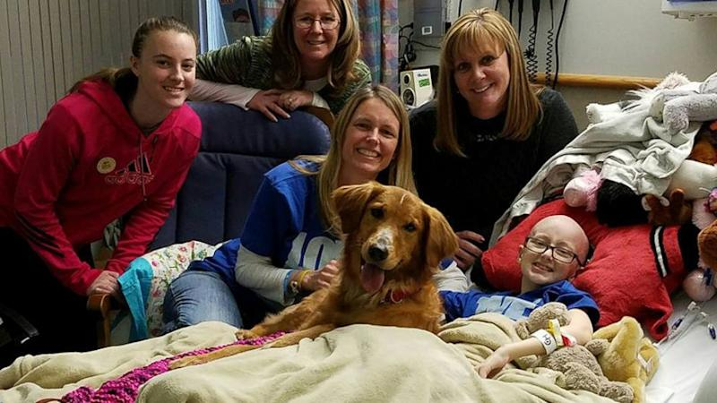Girl battling cancer granted wish of seeing 'A Dog's Purpose,' gets visit from dog in film (ABC News)