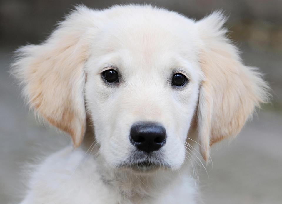 Beware of puppy scams. (Photo by: Marc Chapeaux/AGF/Universal Images Group via Getty Images)