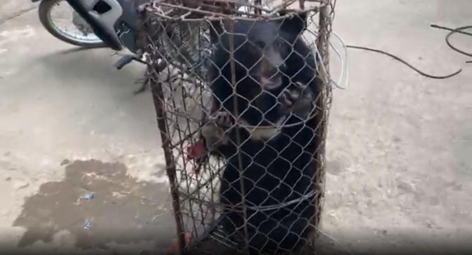 bear cub rescued from motorcycle
