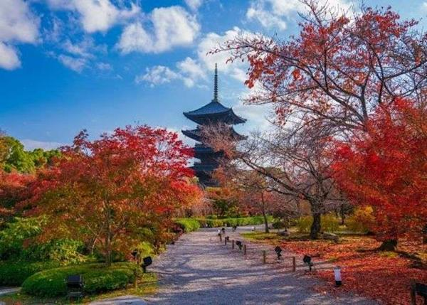 Kyoto Autumn Travel Guide: Exploring Kyoto's Famous Pagoda at Toji!