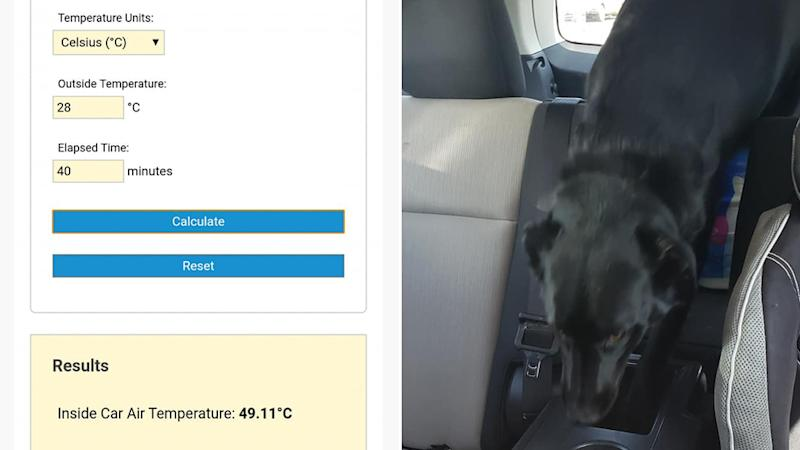 Sintich Kat shows the temperature at the time she spotted a dog locked in a hot car.