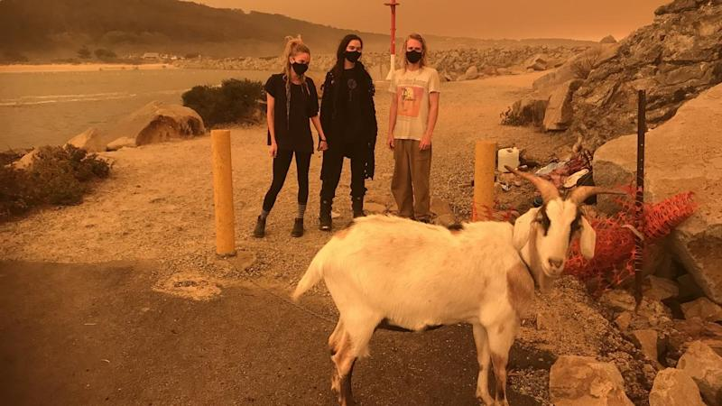 Housemates evacuated their Central Tilba home with their pet goat to Narooma on the NSW South Coast