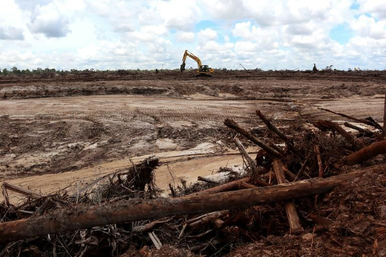 Globally deforestation has only escalated in recent years -- destruction of pristine rainforest was 12 percent higher in 2020 than the year before despite a global economic slowdown, according to Global Forest Watch (AFP/GALIH)