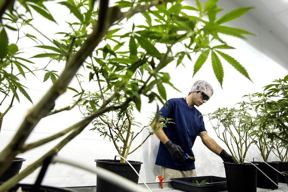 Employees work in the Mother Room at the Canopy Growth Corp. facility in Smith Falls, Ontario, Canada, on Tuesday, Dec. 19, 2017. Canadian medical marijuana is setting the stage to go global. The country's emerging legal producers have a chance to seize opportunities in other countries that could make them worldwide leaders, according to Linton. Photographer: Chris Roussakis/Bloomberg via Getty Images