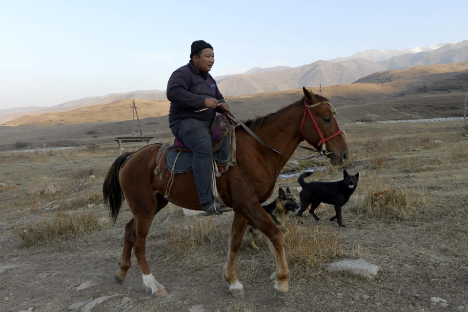 Kanat Kaliyev's son Adilet, 30, rides a hors on his way home from the pasture near Tash Bashat village, about 24 kilometers (15 miles) southeast of Bishkek, Kyrgyzstan, Saturday, Oct. 17, 2020. Political turmoil has gripped Kyrgyzstan over recent years, but life in this quiet village nestled between scenic mountains follows its centuries-old course. (AP Photo/Vladimir Voronin)