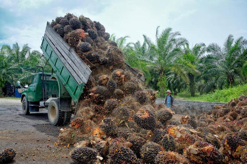 Unsaturated fat means less harmful palm oil production