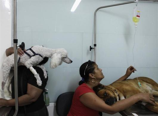 A woman (R) looks at a bag of saline solution of her dog as another holds her dog in the Anclivepa-SP veterinarian hospital in Sao Paulo August 22, 2012.
