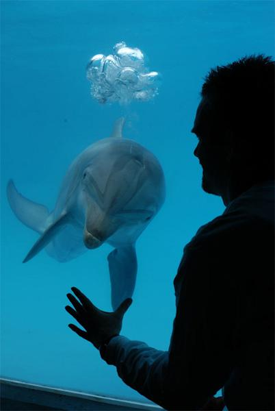 Device May Let Humans Communicate With Dolphins