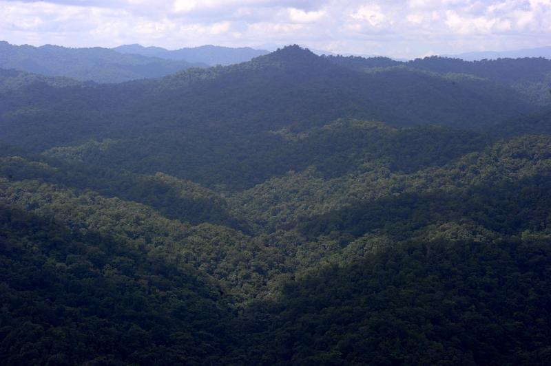 A view of the Rio Platano biosphere reserve in Honduras, where explorers over the past century have claimed several times to have spotted the White City