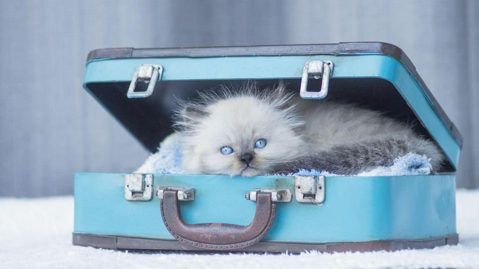 <p>We wouldn't recommend packing pack your cat in your suitcase, but do encourage you to take them on vacation to make it better. </p>