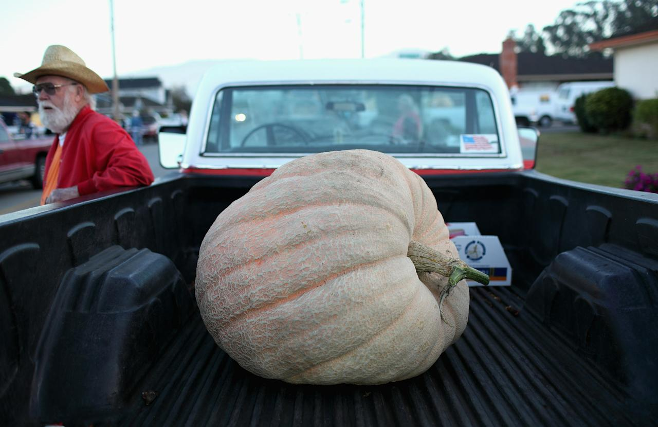 HALF MOON BAY, CA - OCTOBER 11:  A giant pumpkin sits in the back of a pickup truck before the start of the 37th Annual Safeway World Championship Pumpkin Weigh-Off on October 11, 2010 in Half Moon Bay, California. Ron Root of Citrus Heights, California won the competition with a 1,535 pound pumpkim and took home $9,210 in prize money equal to $6 a pound.  (Photo by Justin Sullivan/Getty Images)
