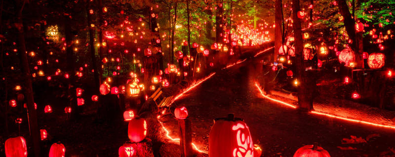 Nightime path lined with carved, lit pumpkins