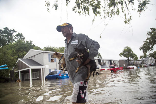<p>Felipe Grande removes his two dogs from his apartment at Bayou Parc at Oak Forest, Aug. 27, 2017, in Houston. (Photo: Marie D. De Jesus/Houston Chronicle) </p>