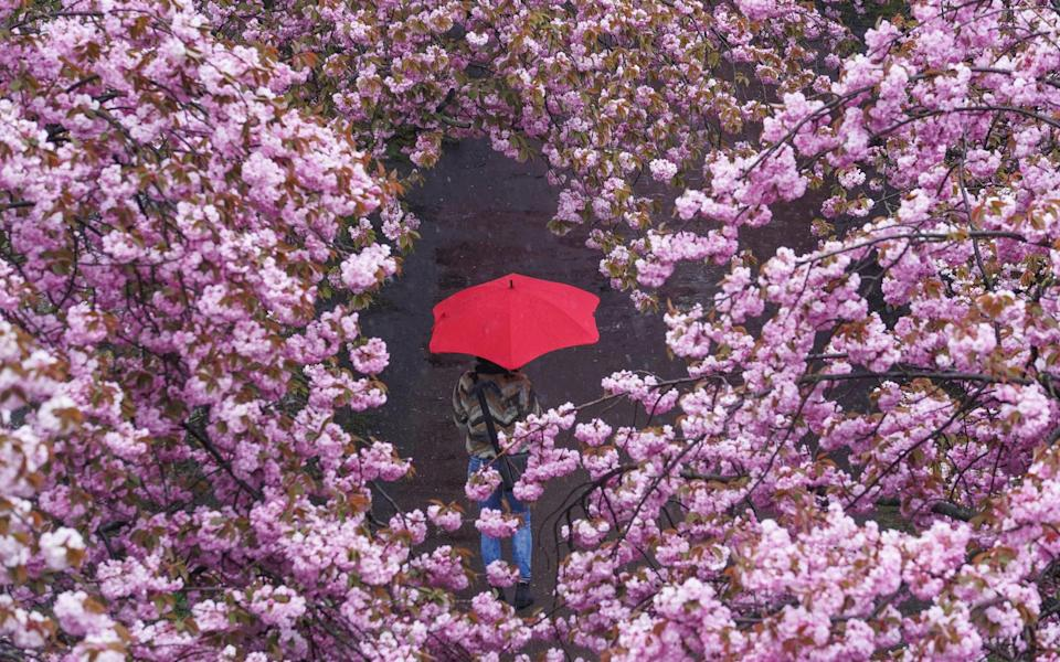 Spring has been a slow burner in Germany, too, where warmer weather is expected next week - AP