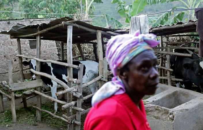 Mwizeneza Winfrid, 62, traverses her yard, where she raises cows, pigs and goats, on November 15, 2017 in the Rulindo District, Rwanda. Winfrid has been a recipient of a biogas digester by a government-financed private company, and says she wishes everybody had access to biogas - not only to drastically reduce cooking time that is otherwise much lengthier when using wood, but also to reduce damage to the environment. She uses the poo discarded from the digester as soil fertilizer. (Photograph by Yana Paskova)