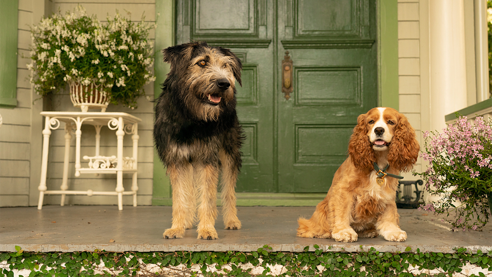 A still from Disney+ launch title <i>Lady & The Tramp</i>. (Disney)