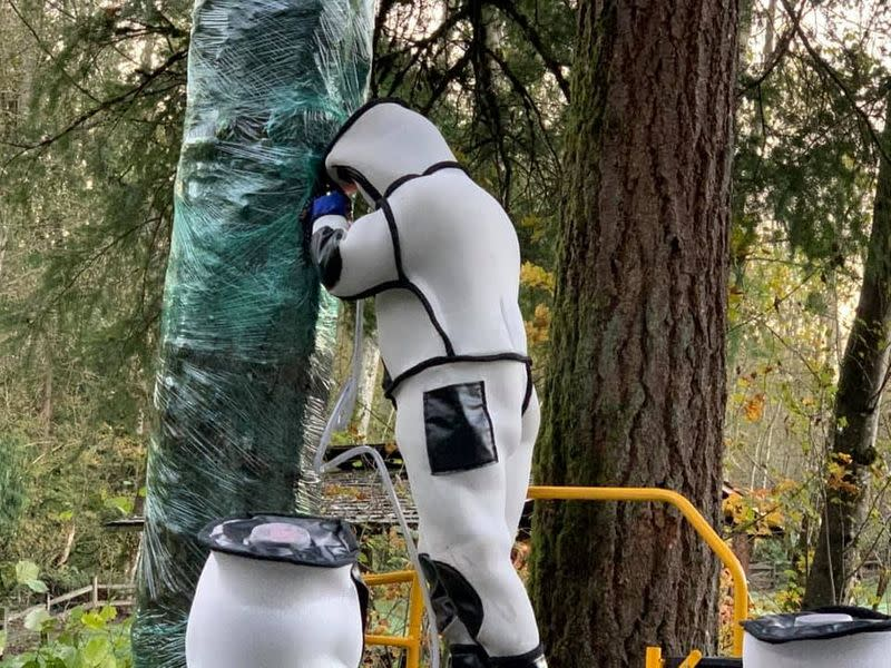 Washington State Department of Agriculture entomologist completes an operation to vacuum a colony of Asian giant hornets in Blaine