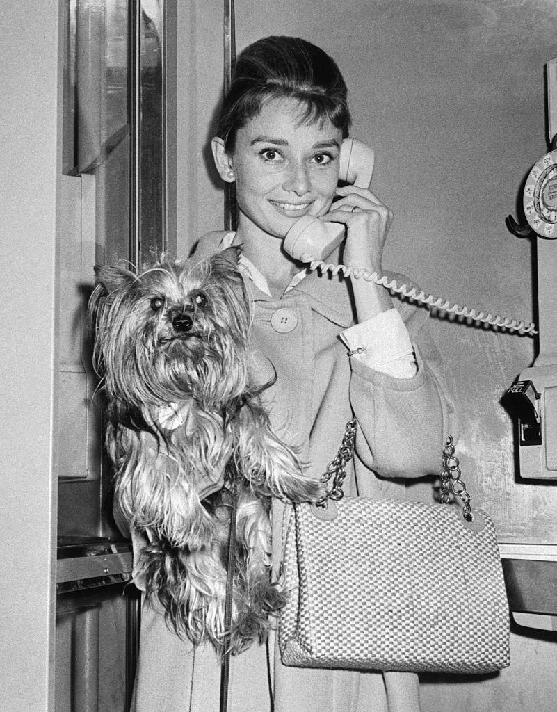 """<p>Throughout her life, Audrey Hepburn favored the Yorkshire Terrier dog breed and her pet, named Mr. Famous, caused <a href=""""https://www.petique.com/blogs/news/meet-mr-famous-and-a-few-of-his-fellow-famous-fur-friends"""" rel=""""nofollow noopener"""" target=""""_blank"""" data-ylk=""""slk:the breed to rise in popularity"""" class=""""link rapid-noclick-resp"""">the breed to rise in popularity</a>. He also earned his fifteen minutes of fame when he served as her <a href=""""https://www.petique.com/blogs/news/meet-mr-famous-and-a-few-of-his-fellow-famous-fur-friends"""" rel=""""nofollow noopener"""" target=""""_blank"""" data-ylk=""""slk:costar in Funny Face"""" class=""""link rapid-noclick-resp"""">costar in <em>Funny Face</em></a>. Here, the starlet was greeted at the airport by Mr. Famous after she'd been away traveling. </p>"""
