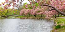 """<p><strong>Let's start big picture. What's the deal?</strong><br> A narrow paradise along both sides of the Charles River, the Esplanade stretches for three miles from the Longfellow Bridge to the Boston University bridge. Over 1,500 trees, charming bridges, playgrounds, ponds, and gardens bring a lyrical quality to this meandering landscape, all of which has been cultivated over the last century to create a calming waterfront retreat. When the green trees brighten into sparkling reds and oranges in autumn, the Esplanade shows its true colors.</p> <p><strong>What should we put on our must-see or must-do list?</strong><br> The Hatch Shell is a half-shell performance space that serves as home base for all things at the Esplanade. Friends meet here to go for walks and enjoy countless free activities, from Zumba classes to concerts. (The venue is most famous for featuring <a href=""""https://www.cntraveler.com/activities/boston/boston-symphony-orchestra?mbid=synd_yahoo_rss"""" rel=""""nofollow noopener"""" target=""""_blank"""" data-ylk=""""slk:Boston Pops"""" class=""""link rapid-noclick-resp"""">Boston Pops</a> on the Fourth of July.)</p> <p>Boston is fantastic when seen by the water, and the Community Boathouse (the first public boating program in the country) is the perfect jumping-off point for a river paddle. On a nice day, hop in a kayak and explore the inlets that curve through the Esplanade before floating down to the Massachusetts Avenue bridge. The less adventurous can settle on a dock with a sandwich, which is equally rewarding and doesn't require a life preserver.</p> <p><strong>Anything tricky about getting here?</strong><br> Divided from Back Bay by harrowing Storrow Drive, the Esplanade requires crossing over perpetual traffic on one of eight pedestrian footbridges. Be aware that only some of these bridges are handicapped-friendly; the Arthur Fiedler footbridge at Arlington Street is wheelchair accessible and an ideal starting point.</p> <p><strong>All said and done, what's the best """