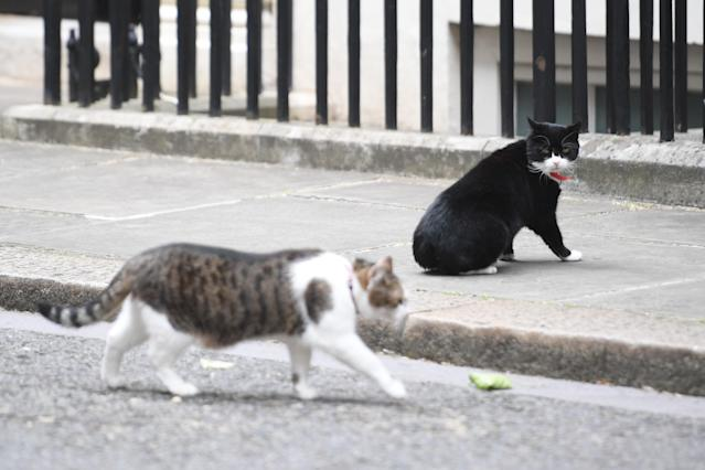 Palmerston with Larry the Downing Street Cat after the 2017 election. (PA)