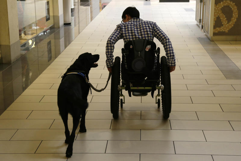 """In this photo taken Tuesday, Oct. 8, 2013, Wallis Brozman is aided by her service dog Caspin while going through a shopping mall in Santa Rosa, Calif. Other victims of unruly fake service dogs are real service dogs, said Brozman, 27, of Santa Rosa. She has dystonia, a movement disorder that left her unable to walk and barely able to talk. She needs a wheelchair, voice amplifier and her service dog who responds to English and sign language. """"When my dog is attacked by an aggressive dog, he is not sure what to do about it and looks to me. It becomes a safety issue, not only for my dog, the target of the attack, but me if I am between the dogs,"""" Brozman said. (AP Photo/Eric Risberg)"""