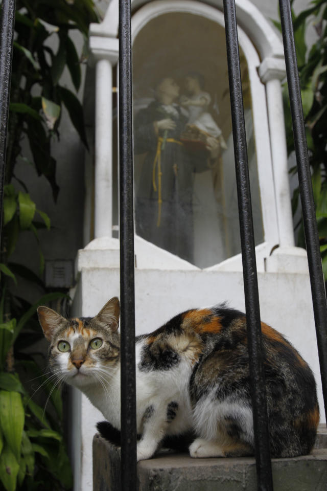 A cat sits in front of a statue of St. Anthony in the central park of Lima's upscale seaside Miraflores district, in Peru, Wednesday, Aug. 2, 2012. (AP Photo/Martin Mejia)