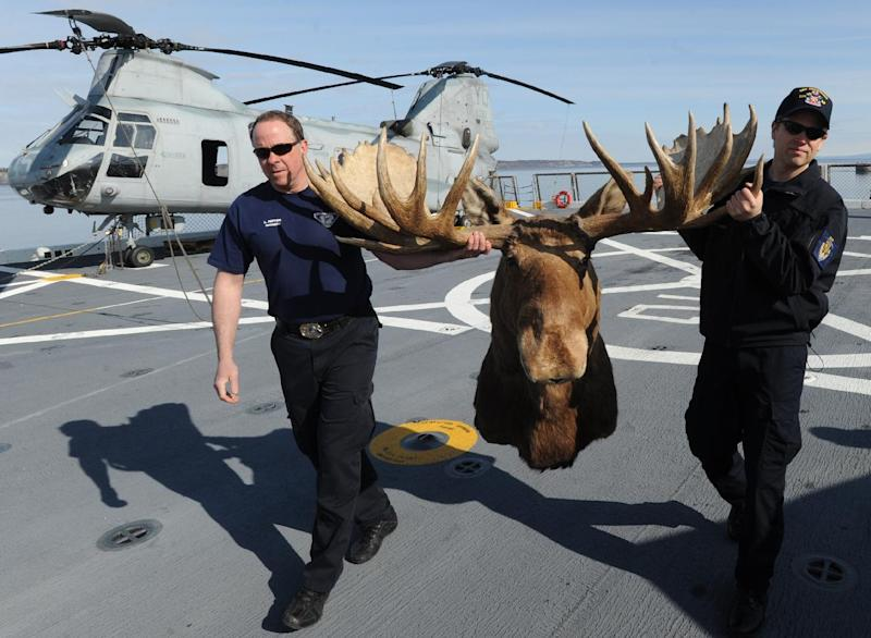 Lex Patten, left, carries a bull moose shoulder mount with a rack measuring 64.5 inches with the help of Cory Purcell, that he donated to the USS Anchorage on Monday, May 6, 2013 in Anchorage, Alaska.  Patten also donated a Dall sheep shoulder mount to the submarine USS Alaska during its commissioning in 1986.  Patten's father Allen Patten, and five of his brothers survived the attack on Pearl Harbor while aboard the USS Nevada, and the brothers later survived the attack on the aircraft carrier USS Lexington during the Battle of the Coral Sea. The USS Anchorage was commissioned on Saturday, May 4, and departed for a return trip to its home port of San Diego, Ca. on Monday evening. (AP Photo/Anchorage Daily News, Bill Roth)