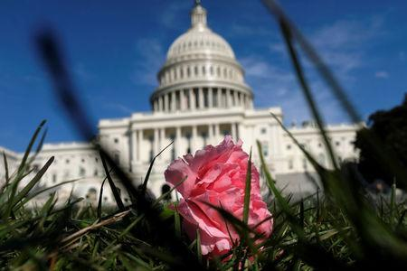 A pink carnation flower laid by activists rests on the West Lawn of the U.S. Capitol in memory of Yemeni children killed by Saudi bombings, in Washington, U.S. March 19, 2018. REUTERS/James Lawler Duggan