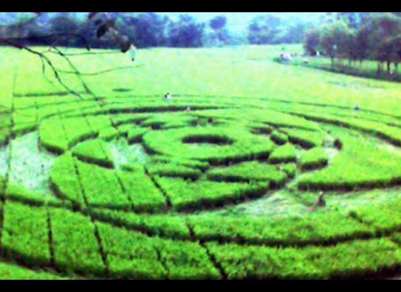 A large circle and geometric pattern local residents say were created by a UFO appeared in a rice field in Krasakan hamlet in Sleman, Yogyakarta, on the morning of Jan. 23, 2011.