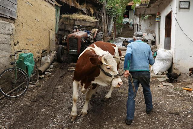 <p>A man walks with a cow in the village of Gornja Kamenica, near the southeastern town of Knjazevac, Serbia, Aug. 14, 2017. (Photo: Marko Djurica/Reuters) </p>