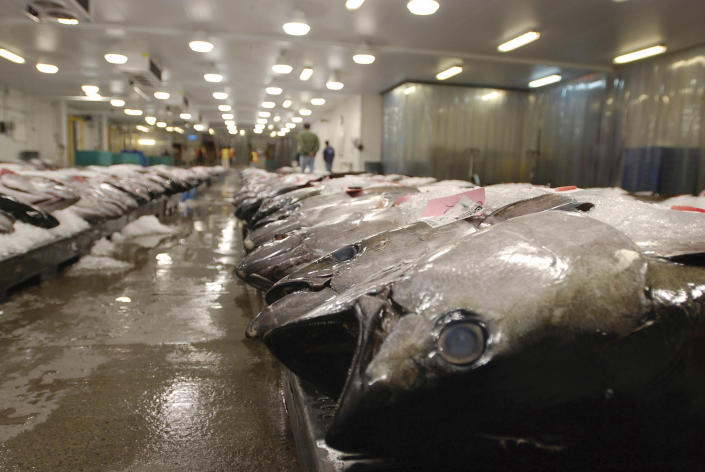 FILE - In this March 23, 2016 file photo, tuna caught by foreign fishermen aboard American boats are lined up at the Honolulu Fish Auction at Pier 38 in Honolulu. A tuna fishing boat based in the Pacific island nation of Fiji that has been accused of essentially enslaving its crew was blocked Wednesday, Aug. 4, 2021, from importing seafood in the United States, part of an increasing effort to keep goods produced with forced labor from entering the country. (AP Photo/Caleb Jones, File)