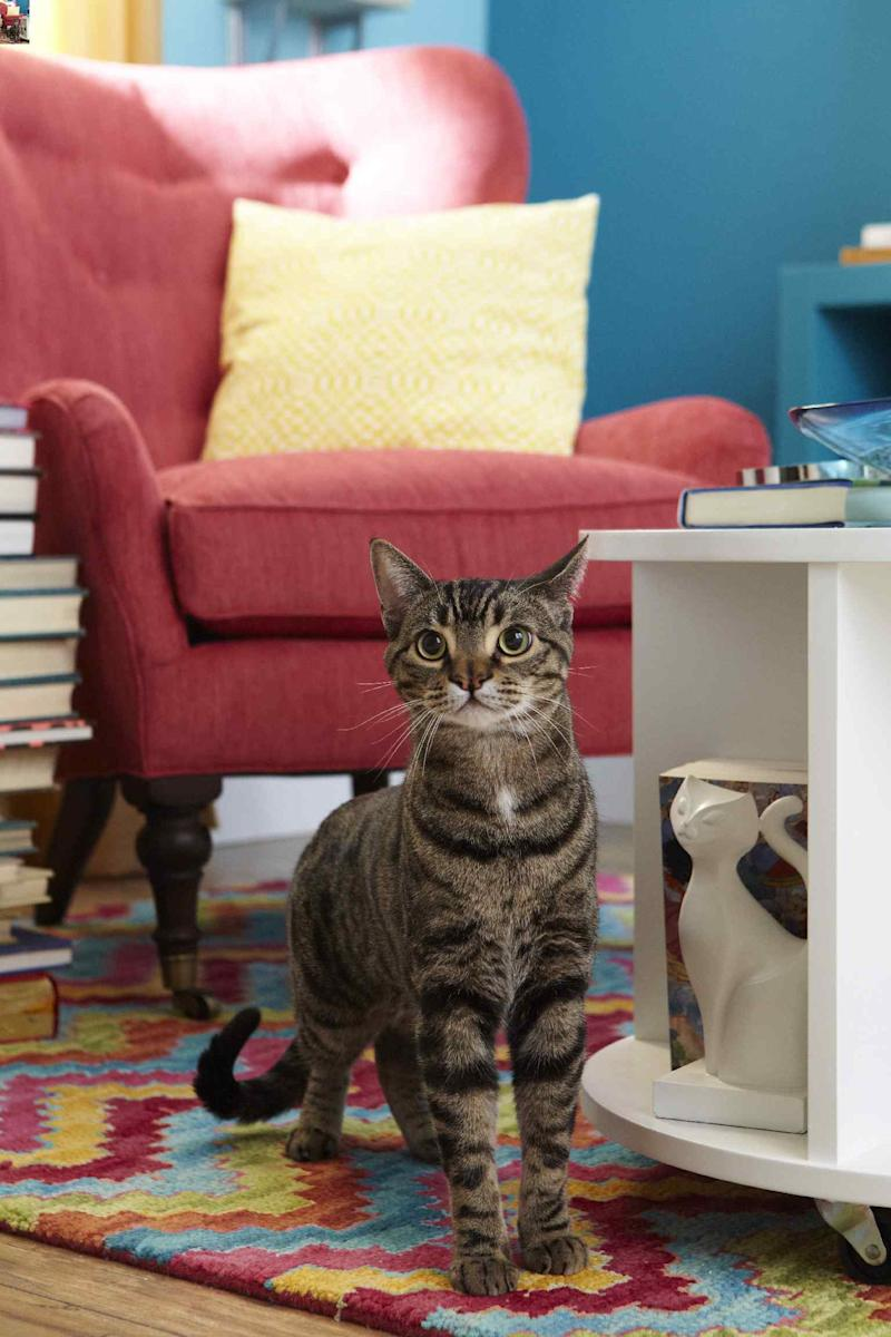 Cat sitting on colorful rug in living room.