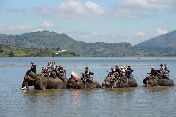 There are fewer than 100 elephants left in the wild in Vietnam and just 80 or so in captivity, mostly used to ferry tourists around the leafy forests of the central highlands (AFP Photo/HOANG DINH NAM)