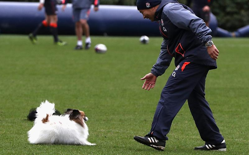 Eddie Jones, the England head coach, attempts to catch his dog, Annie, during a training session held at Pennyhill Park on February 22, 2017 - Credit: David Rogers/Getty Images