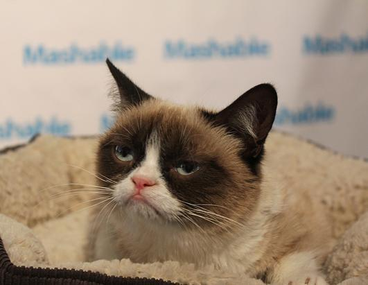 The biggest lines at the festival are to see a cat. And not just any cat -- Grumpy Cat. Grumpy Cat is the star of a famous Internet cat meme. She even has more than 53,000 Twitter followers