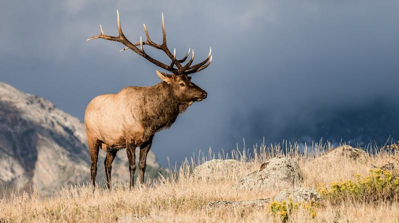 Idled Federal Workers Called Back To Wildlife Refuges So People Can Hunt