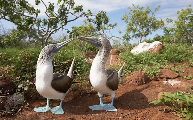 "<p>Score: 88.53</p> <p>Its no wonder the Galápagos has won top honors in this category for 16 years straight. Many of our readers said that visiting this archipelago, a popular place to see via <a href=""https://www.travelandleisure.com/worlds-best/small-ocean-cruise-ships"" rel=""nofollow noopener"" target=""_blank"" data-ylk=""slk:expedition cruise ship"" class=""link rapid-noclick-resp"">expedition cruise ship</a>, is a humbling, once-in-a-lifetime experience. Spectacular wildlife — iguanas, sea lions, penguins, blue-footed boobies — inhabit these volcanic islands. What this means for you: up-close encounters with some of the rarest, most exotic species in the world, as you go scuba diving and hiking. ""It's definitely worth the trip just to see the diversity of sea and land life here,"" raved one reader.</p> <p><strong><em>See all of our readers' favorite hotels, airlines, cruise lines, and more in the <a href=""https://www.travelandleisure.com/worlds-best"" rel=""nofollow noopener"" target=""_blank"" data-ylk=""slk:World's Best Awards for 2018"" class=""link rapid-noclick-resp"">World's Best Awards for 2018</a>.</em></strong></p>"