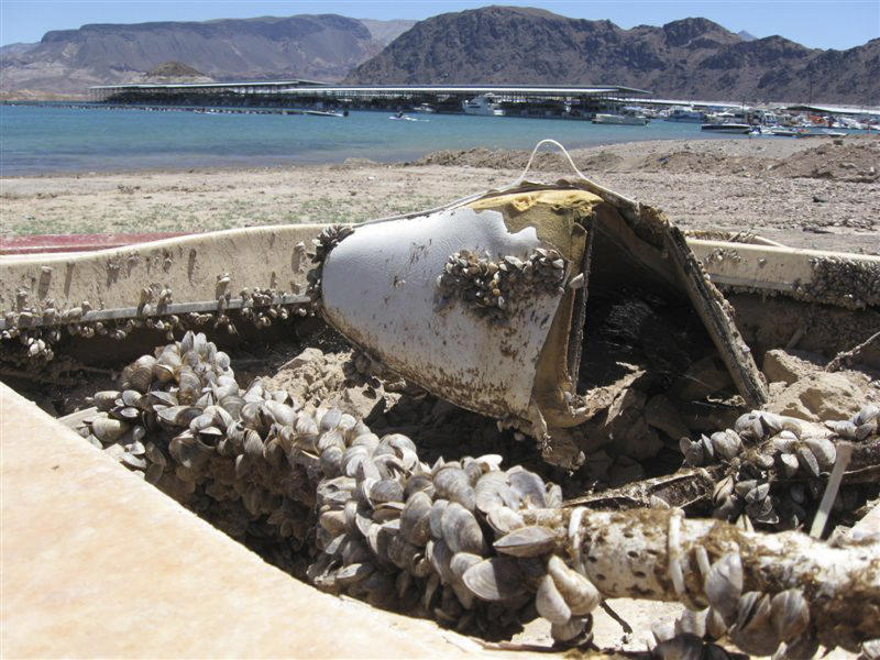File - In this July 6, 2009 file photo, invasive quagga mussels cover this formerly sunken boat at Lake Mead National Recreation Area in Lake Mead National Recreation Area, Nev. A regional power planning group from Idaho, Oregon, Washington and Montana is pursuing $2 million from the federal government to help fend off the menace of invasive mussels that have clogged Colorado River reservoirs since 2007. These states and others say they're frustrated by the number of boats that continue to come from Lake Mead in Nevada and Arizona over their borders infested with quagga and zebra mussels. (AP Photo/Felicia Fonseca, File)