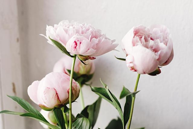 How To Grow And Care For Peonies And Why We Re All So Obsessed