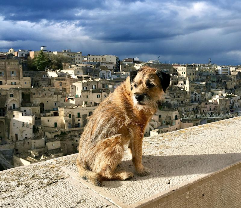 Pete the border terrier in Italy. (Photo: Caters News)